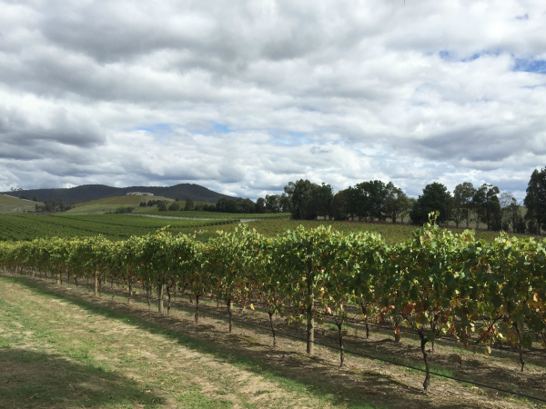 A Day in the Yarra Valley: Epicurean Wine Tour Review